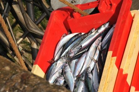 Le magasin la chasse et la pêche belovo